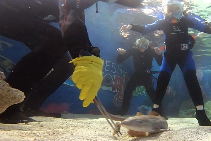Shark Snorkel Ranger