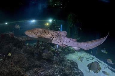 Shark Diving Experience Thumb
