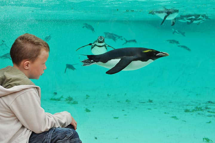 ZSL London Zoo and Lunch for Two