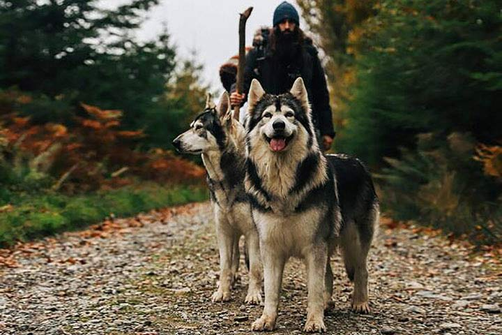 Game of Thrones Tour with Castle Ward & Direwolves for Two