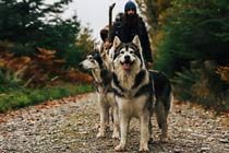 Game of Thrones Tour with Castle Ward & Direwolves for Two Thumb