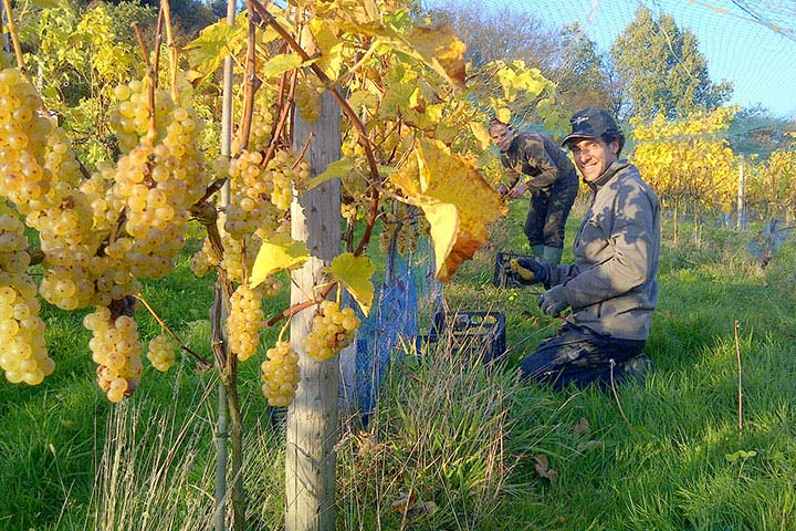Sedlescombe Vineyard Deluxe Tour for Two
