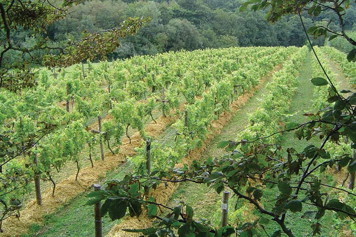 Sedlescombe Vineyard Luxury Tour and Overnight Stay for Two