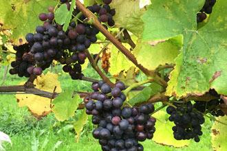 Vineyard Tour and Tasting at Hanwell Wine Estate