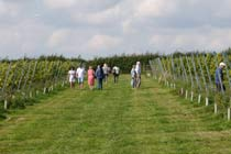 Vineyard Tour and Tasting at Hanwell Wine Estate Thumb