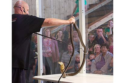 Venomous Snake Show for Two
