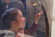 Venomous Snake Show for Two Thumb