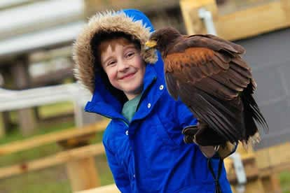 image of Full Day Medieval Falconry Experience at Hedingham Castle