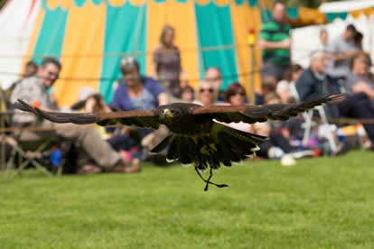 Full Day Medieval Falconry Experience at Hedingham Castle