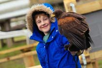 Click to view details and reviews for Full Day Medieval Falconry Experience At Hedingham Castle.