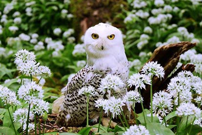 Owl Encounter At Riverside Falconry