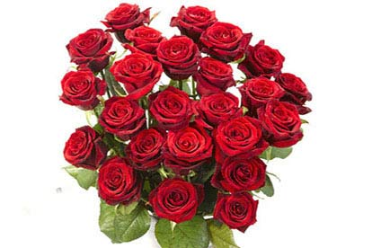 Image of 24 Rose Bouquet