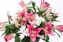 Click to view details and reviews for Stargazer Lily Bouquet.