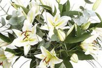 Click to view details and reviews for White Elegance Longi Lily Bouquet.