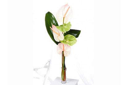 Amazing Anthurium with Vase