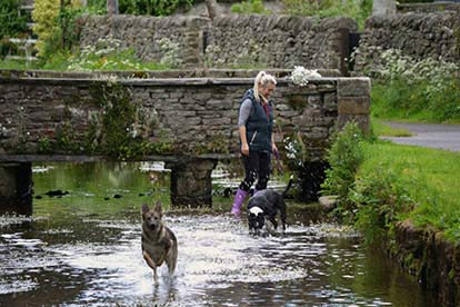 £99 Credit Towards 'Dog Friendly Cottages'