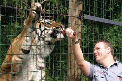 Feed the Big Cats at Paradise Wildlife Park