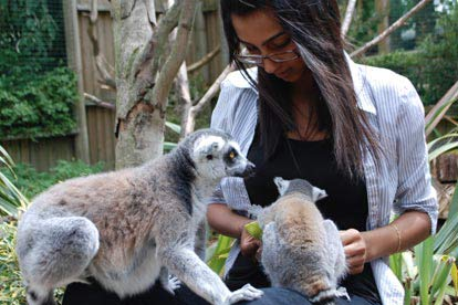Feed the Lemurs at Paradise Wildlife Park
