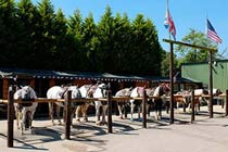 Half Day Western Horse Ride with Lunch for Two Thumb