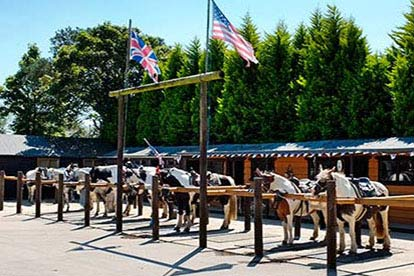 Half Day Western Horse Ride with Lunch for Two
