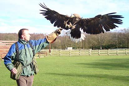 half day eagle encounter