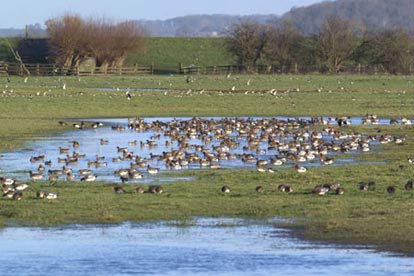 Wildfowl & Wetlands Trust Membership
