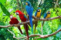 Birds of Paradise Experience