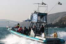 Sea Safari for Two