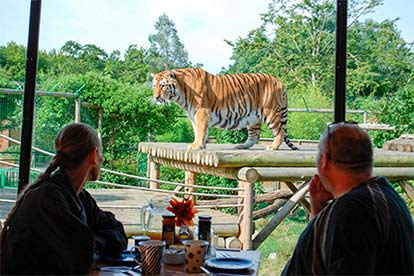 Afternoon Tea with the Tigers