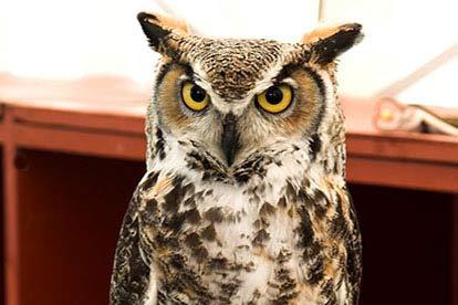 Owl Handling Session