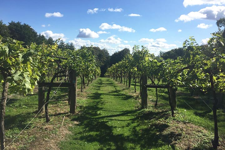 Winery and Brewery Tour with Tasting for Two
