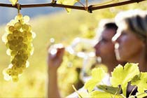 Click to view details and reviews for Vineyard Tour Tasting With Cream Tea For Two.