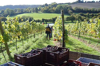 Daws Hill Vineyard Tour and Tasting for Four