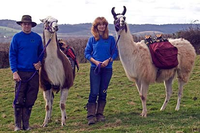 Llama Experience with Cream Tea for Two