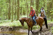 Two Hour New Forest Horse Riding Experience