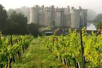Click to view details and reviews for Deluxe Vineyard Tour And Tasting For Two.
