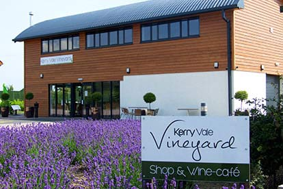 Afternoon Tea for Two at Kerry Vale Vineyard