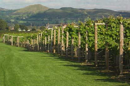 Afternoon Tea with Bubbly at Kerry Vale Vineyard for Two