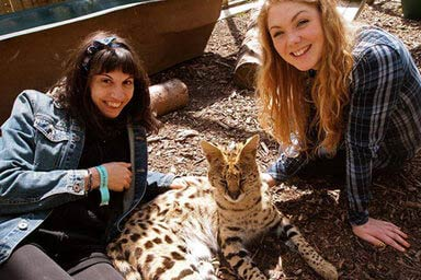 Click to view details and reviews for Meet The Meerkats Servals And Lemurs At Hoo Farm For Two.