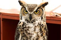 Owl Handling for Two at Bridlington's Birds of Prey