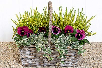 Autumn Basket Gift From Appleyard