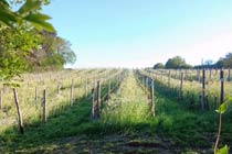 Ploughman's Lunch and Tastings at Sedlescombe Vineyard for Two