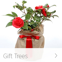 Gift Trees